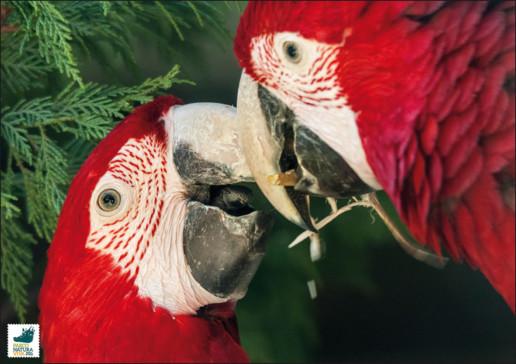 Ara dalle ali verdi
