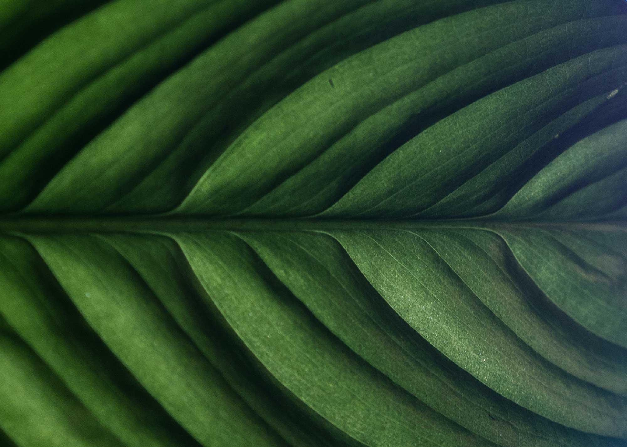 biomimicry biomimetica